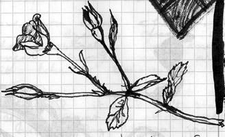 I drew this.