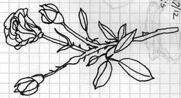 Sarah drew this.